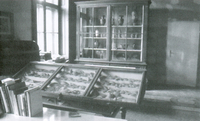 "Fig. 2: So-called ""Cretan room"" of the Department of Archeology around 1980. © E. Pochmarski."